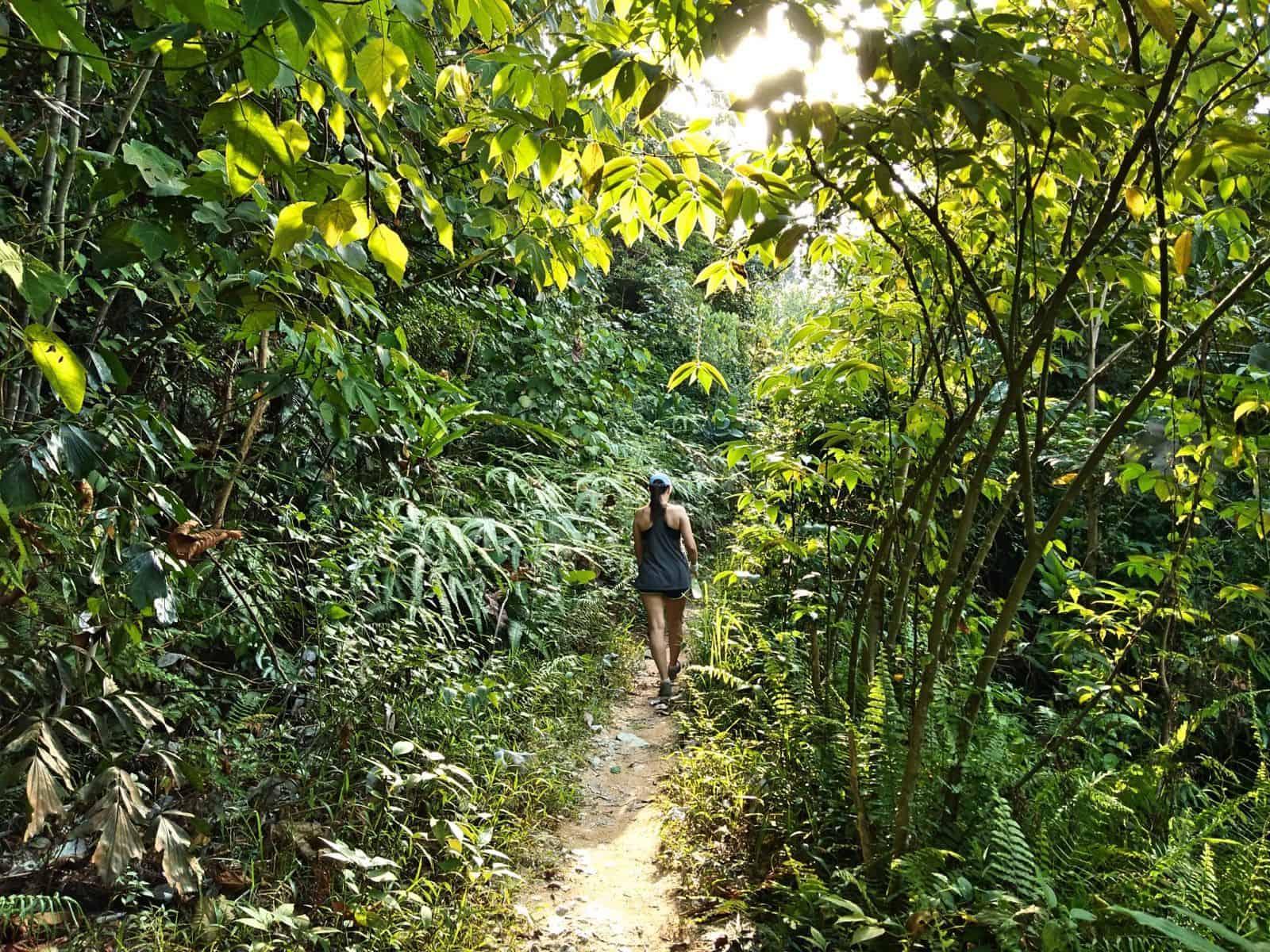 Bukit-Kiara-jungle-hike-Mont-Kiara-TTDI-Kuala-Lumpur-Malaysia ] Travel Mermaid