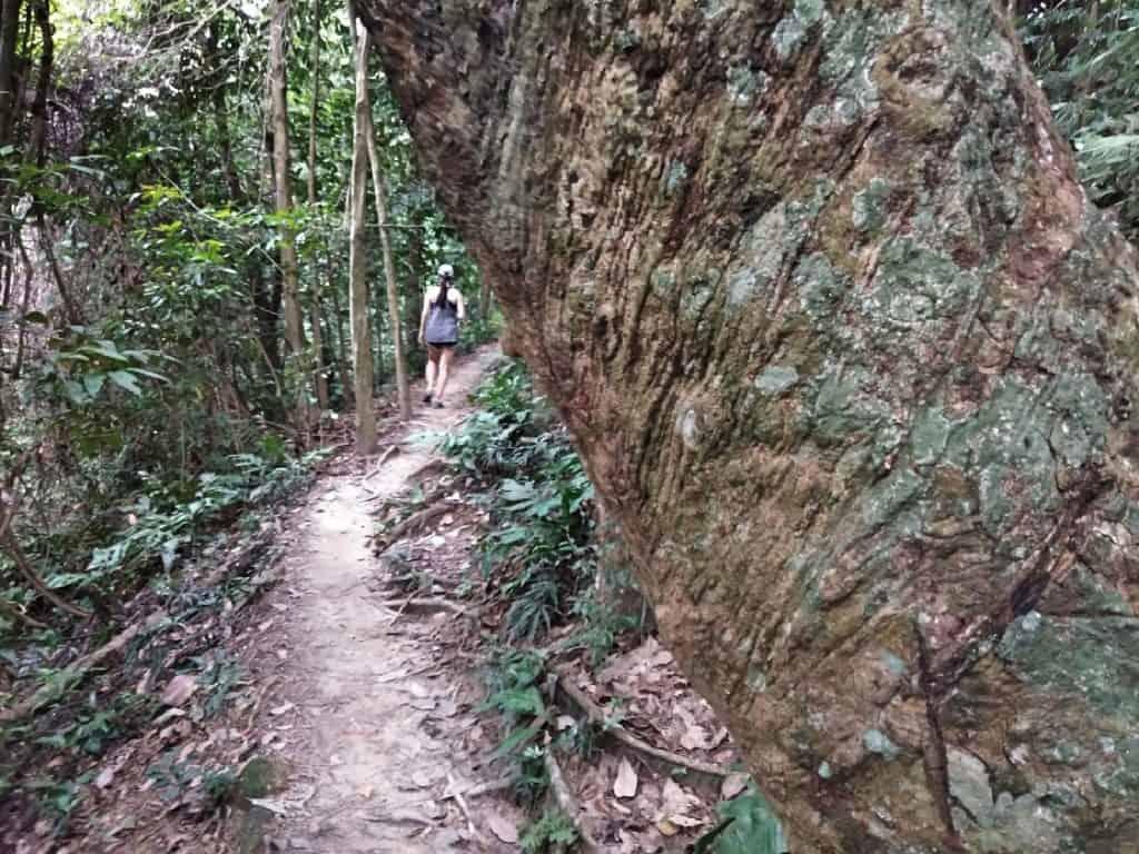 jungle-hiking-Kuala-Lumpur-Bukit-Kiara-trail-guide-TTDI-Mont Kiara-Malaysia ] Travel Mermaid