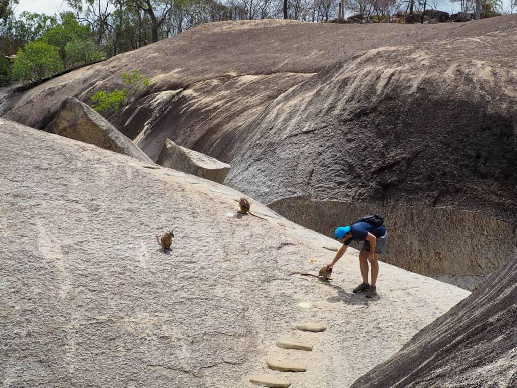 Granite-Gorge-Wallabies-Atherton-Tablelands-North-Queensland-Australia ] Travel Mermaid 042