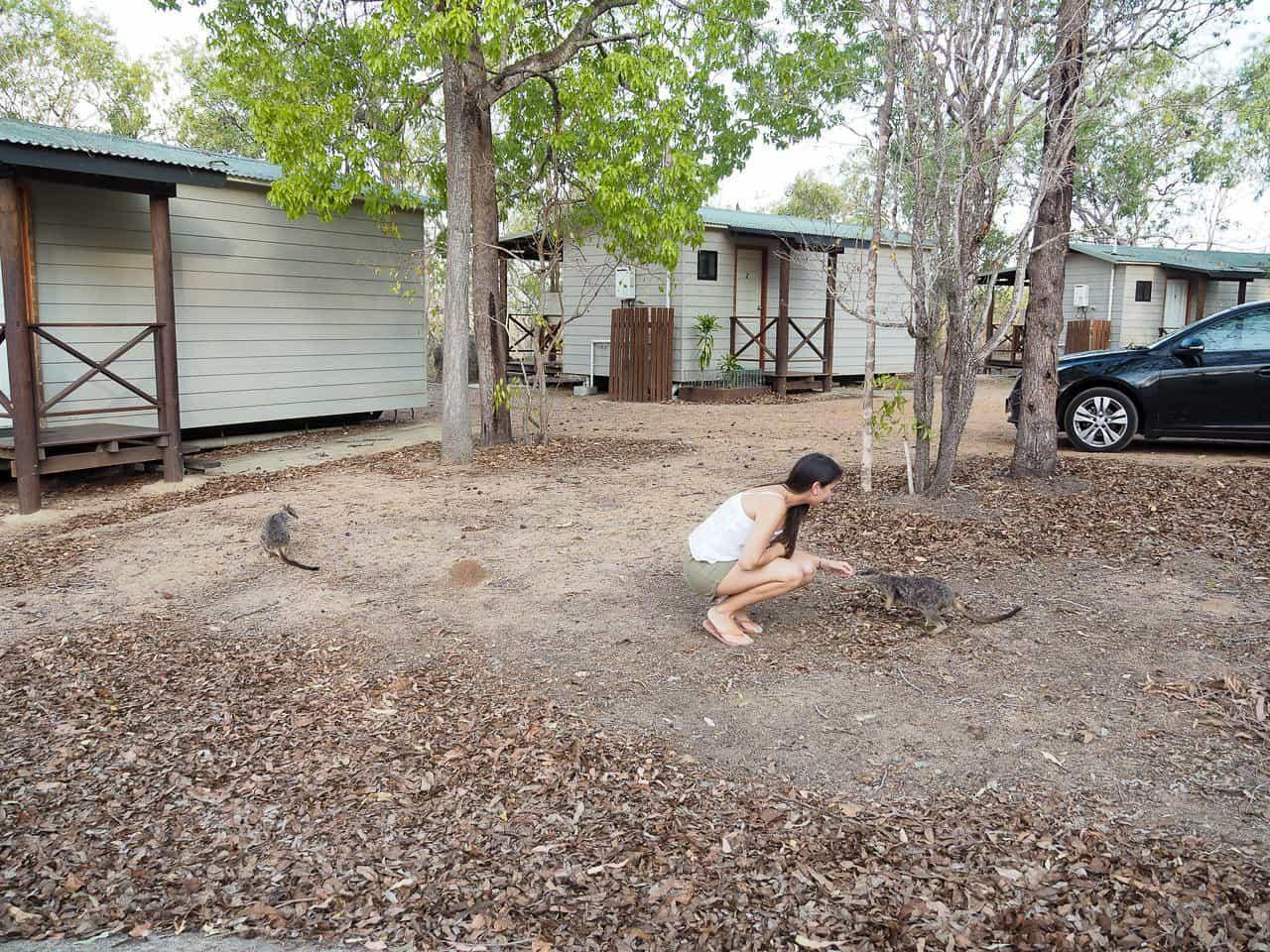 Granite-Gorge-Wallabies-Atherton-Tablelands-North-Queensland-Australia ] Travel Mermaid 146