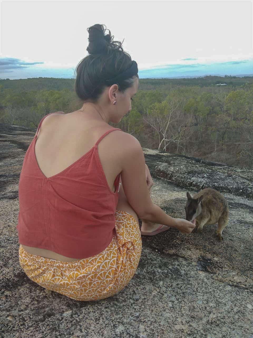 Granite-Gorge-Wallabies-Atherton-Tablelands-North-Queensland-Australia ] Travel Mermaid