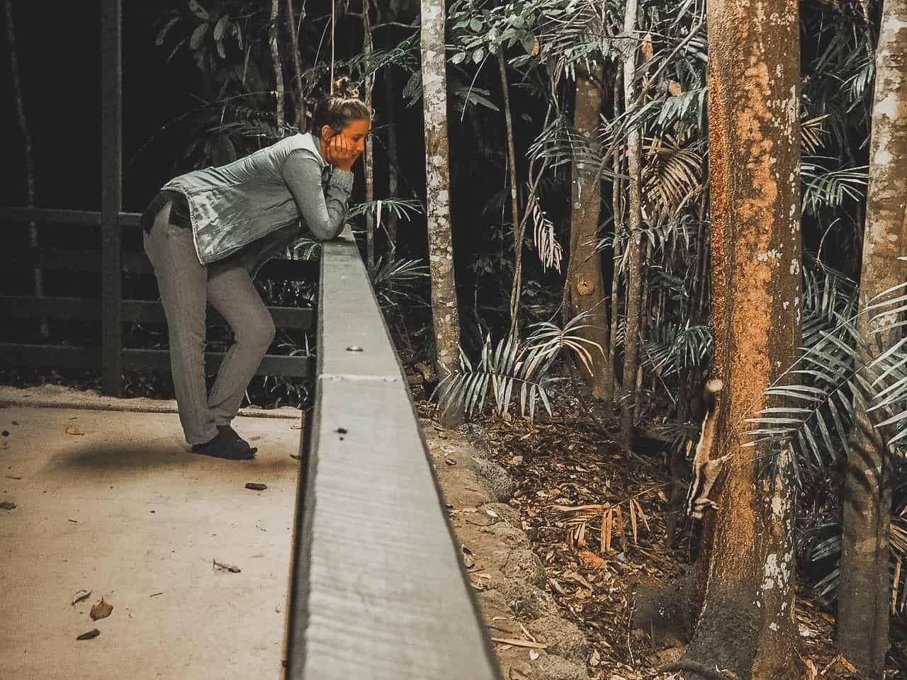 striped-possum-Chambers-Wildlife-Lodge-Atherton-Tablelands-North-Queensland-Australia ] Travel Mermaid 019