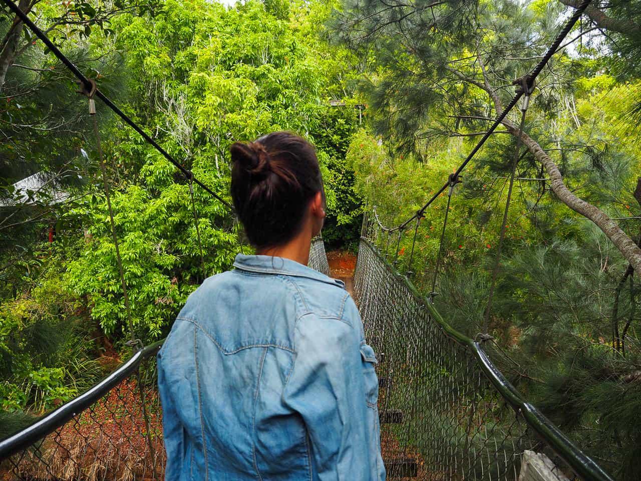 Peterson-Creek-walking-track-Yungaburra-Atherton-Tablelands-North-Queensland-Australia ] Travel Mermaid