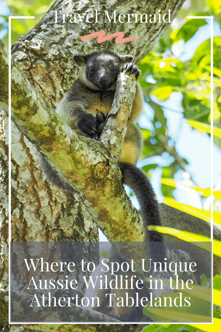 Where-to-Spot-Unique-Australian-Wildlife-in-the-Atherton-Tablelands-Queensland-Australia